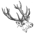 Antlers (PSF).png