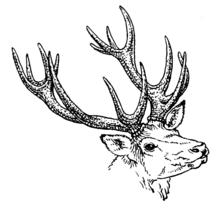 Amazon De Deer Antler Schablone Vorlage Wiederverwendbar