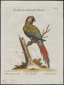 Ara militaris - 1700-1880 - Print - Iconographia Zoologica - Special Collections University of Amsterdam - UBA01 IZ18500111.tif