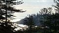 Araucaria heterophylla Endeavour Lodge Norfolk Island 4.jpg