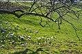 Arboretum Zürich 2014-03-10 15-14-08.JPG
