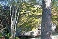Arholma boulder - panoramio (2).jpg