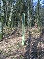 Arnhem-grenspaal-wolfhezerbossen-west.JPG