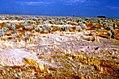 Atriplex vegetation with kit fox den, north of buttonwillow, kern co, july 1969 (26251612324).jpg