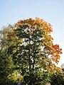 Autumn. Morning - panoramio (1).jpg