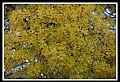 Autumn Leaves begin to fall-003 (5659051475).jpg