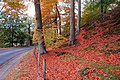 Autumn at Minnowburn near Belfast (3) - geograph.org.uk - 599607.jpg