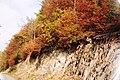 Autumn colours in Glyn-Hafren Wood - geograph.org.uk - 574031.jpg