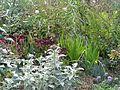 Autumn front garden - Flickr - peganum.jpg