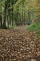 Autumn stroll through Lidcombe Wood, Stanway - geograph.org.uk - 611406.jpg