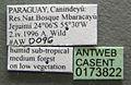Azteca adrepens casent0173822 label 1.jpg