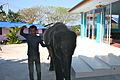 Baby elephant (8355665048).jpg