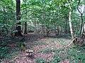 Balade en Forêt de Verrières le 20 août 2017 - 043.jpg