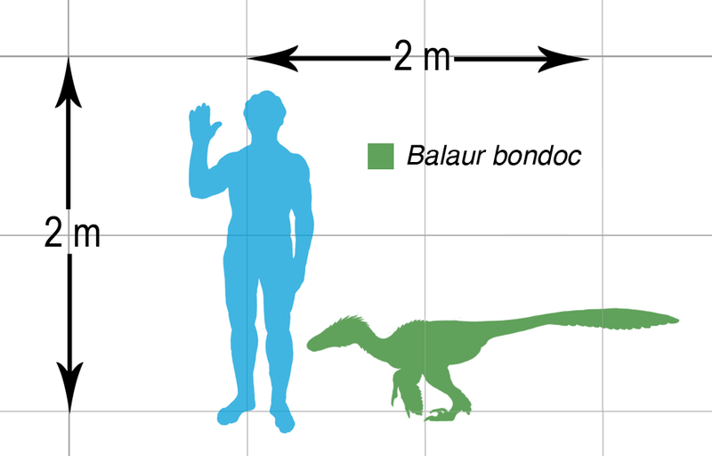 http://upload.wikimedia.org/wikipedia/commons/thumb/b/b1/Balaur_bondoc_scalechart.png/800px-Balaur_bondoc_scalechart.png