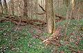 Bannwald Rotenacker beim Remminger Schlössle 140330.jpg