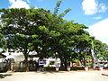 Baras,Rizaljf5918 08.JPG