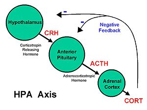 Behavioral epigenetics - The hypothalamic pituitary adrenal axis is involved in the human stress response.