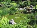 Bassin de jardin 0003.jpg