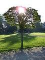 Baum im Schnickenloch - panoramio.jpg