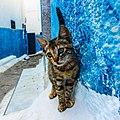 Beautiful cat in Kasbah of Udayas 2019 (cropped).jpg
