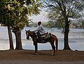 Berber Horseman.jpg