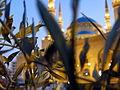 Beyrouth (9861438174).jpg