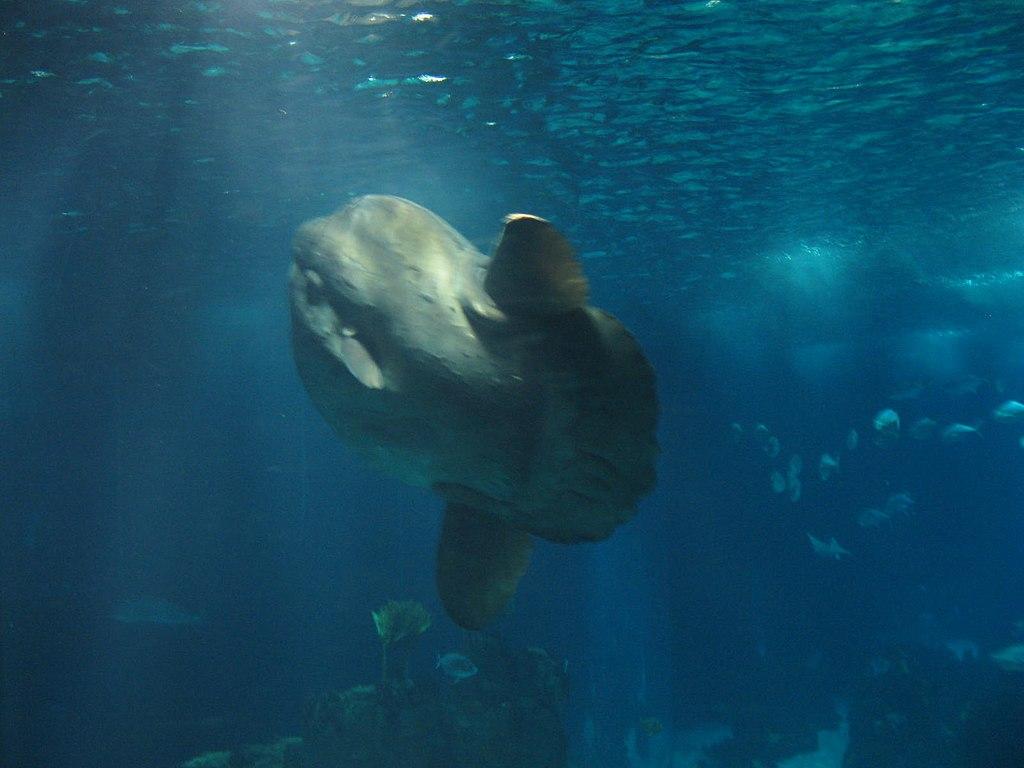 Biggest fish in the aquarium