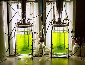 Ralf Reski - Moss bioreactor with Physcomitrella patens