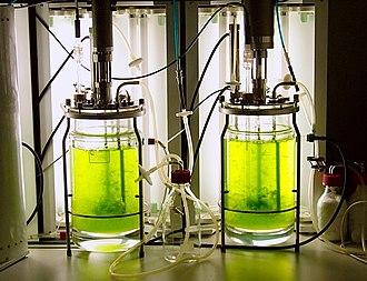 Physcomitrella patens - Image: Bioreaktor quer 2