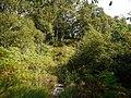 Birch woodland on Holystone Common - geograph.org.uk - 1483333.jpg