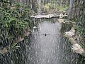 Bird Park in Kuala Lumpur (Malaysia) (33).jpg