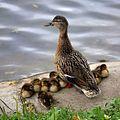 Birds family.jpg