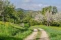 Blühende Obstbäume an der Limburg mit Blick auf die Teck, Weilheim Teck, Baden-Württemberg.jpg