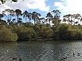Black Park Lake (1439132377).jpg