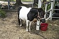 Black and White Pony-1 (32300140574).jpg