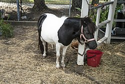 Black and White Pony-1 (32300140574).jpg