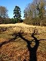 Blackensford Lawn, North Oakley Inclosure, New Forest - geograph.org.uk - 734333.jpg