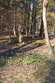 Bledule jarní v PR Králova zahrada 19.jpg