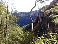 Blue Mountains National Park NSW 2787, Australia - panoramio - noah.odonoghue (17).jpg