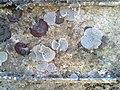 Boat fouling organisms (4874665601).jpg