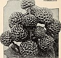 Bountiful Ridge Nurseries - your 1941 guide to better fruits and more beautiful homes (1941) (19784157104).jpg