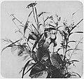 Braun, Adolphe - Blumen (3) (Zeno Fotografie).jpg