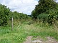 Bridleway near Chilbridge Farm - geograph.org.uk - 1471306.jpg