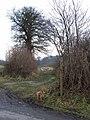 Bridleway off Lodge Lane - geograph.org.uk - 1141595.jpg