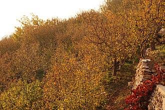 Bsharri - Image: Bsharri Apple Trees (Autumn)