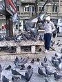 Bucuresti, Romania. Porumbei, porumbei...pe Magheru. Unde esti tu Hitchcock?.jpg