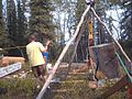 Building a cabin in forest.jpg