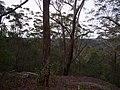 Burgh Track - panoramio (10).jpg