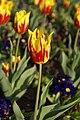 Bury St Edmunds 22 April 2007 132eb (471747923).jpg
