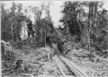 Bush tramway showing wooden rails, at Akatarawa, Price's Bush, circa 1903 ATLIB 336632.png